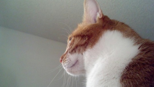 """""""Good morning, Human"""",  said the cat on my chest."""